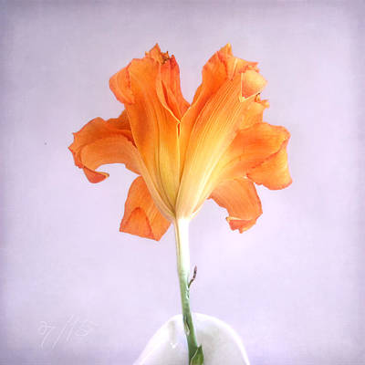 Photograph - Orange Daylily On A Light Purple Background by Louise Kumpf