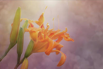 Photograph - Orange Daylily Painterly Glow by Patti Deters