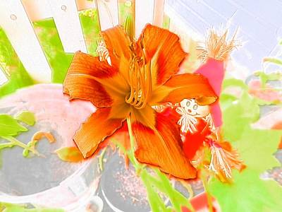 Photograph - Orange Delight by Belinda Lee