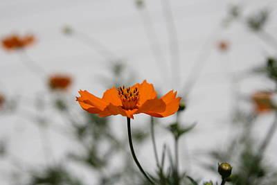 Photograph - Orange Delight by Kathleen Sartoris