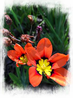 Photograph - Orange Delight by Leslie Hunziker