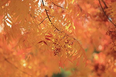 Photograph - Orange by Digiblocks Photography