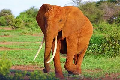 Nairobi Photograph - Orange Elephant by Happy Home Artistry