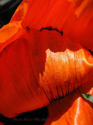 Photograph - Orange Euphoria 2 - Poppy - Floral Macro by Brooks Garten Hauschild