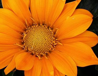 Photograph - Orange Explosion by Bruce Bley
