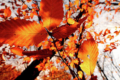Print featuring the photograph Orange Fall Leaves by Meta Gatschenberger