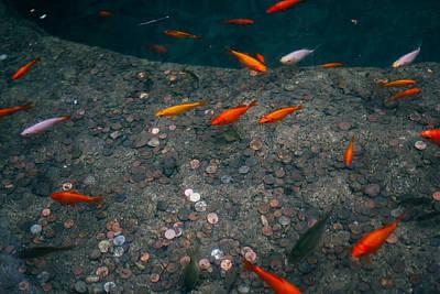 Orange Fish Pond Art Print