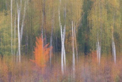 Photograph - Orange Flare Forest Blur by Patti Deters