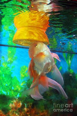 Gold Fish Photograph - Orange Float by Joy Tudor