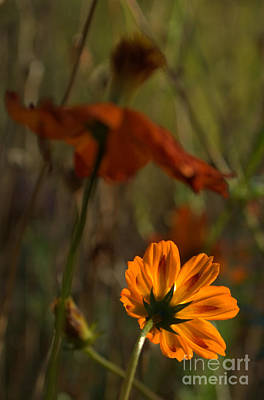 Photograph - Orange Floral by Anjanette Douglas