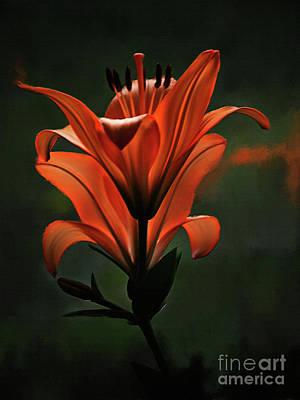 Orange Flower 0321 Original