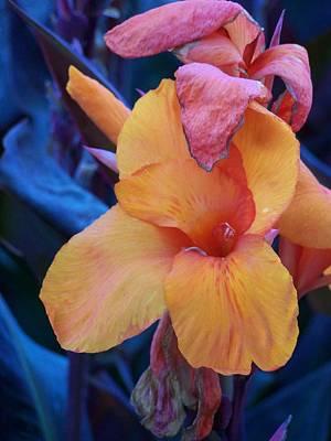 Wall Art - Photograph - Orange Flower 2 by Kat Micari