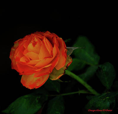 Photograph - Orange Flower by Chaza Abou El Khair