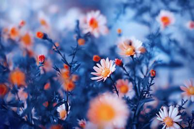 Garden Flowers Photograph - Orange Flower On Blue by Oksana Ariskina