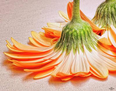 Photograph - Orange Flower Upside Down by Peg Runyan