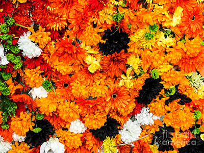 Photograph - Orange Flower Wall by Robin Zygelman
