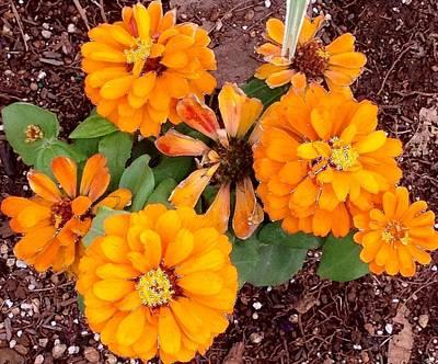Photograph - Orange Flowers by Alohi Fujimoto