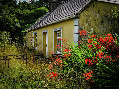 Photograph - Orange Flowers At Abandoned Cottage by James Truett