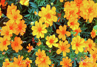 Photograph - Orange Flowers by Ethna Gillespie