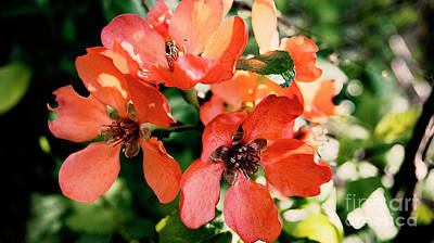 Flowers Photograph - Orange Flowers by Nat Air Craft