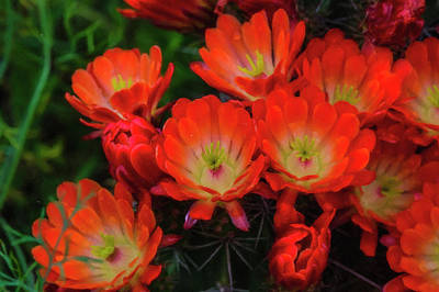 Photograph - Orange Flowers by Roy Nierdieck
