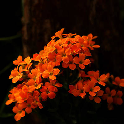 Photograph - Orange Flowers Square by Judy Vincent