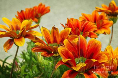 Floral Photograph - Orange Flowes by Carlos Caetano