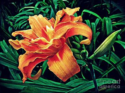 Frenzy Photograph - Orange Frenzy by Sarah Loft