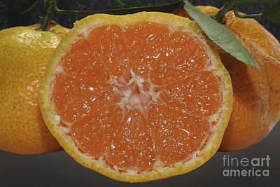 Photograph - Orange Fruit Slices by Ella Kaye Dickey