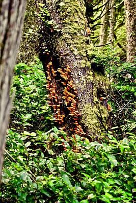 Photograph - Orange Fungi  by Brian Sereda