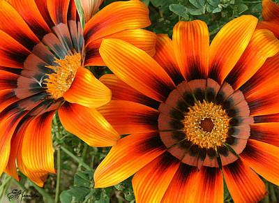 Painting - Orange Gazania by Ellen Henneke
