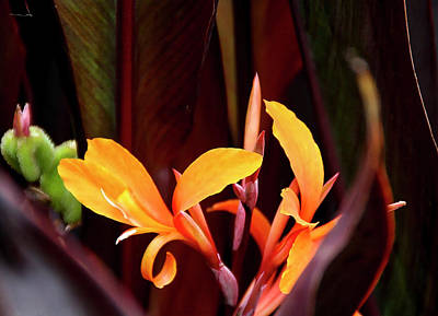 Photograph - Orange Gladiolus 2 by Gene Parks