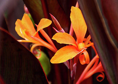 Photograph - Orange Gladiolus 3 by Gene Parks