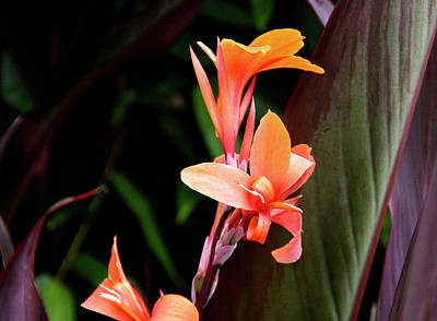 Photograph - Orange Gladiolus by Gene Parks