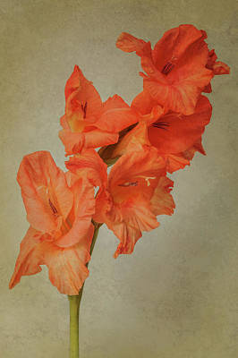 Photograph - Orange Gladiolus Spike by Patti Deters