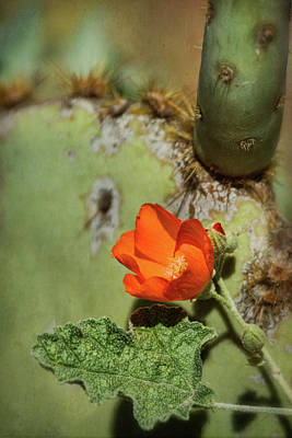 Photograph - Orange Globemallow And Prickly Pear by Saija Lehtonen