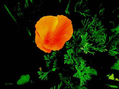 1-war Is Hell Royalty Free Images - Orange Glow Flower Portrait Royalty-Free Image by Debra Lynch