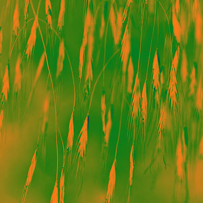 Manipulated Digital Photograph - Orange Grass Spikes by Heiko Koehrer-Wagner