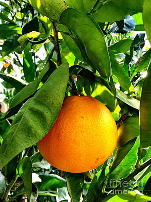 Photograph - Orange Hanging From Tree Ready To Be Picked by Bryan Mullennix