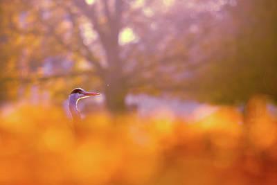 Orange Haze -blue Heron In Autumn Scene Art Print by Roeselien Raimond