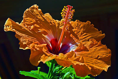 Passiflora Digital Art - Orange Hibiscus. by Andy Za