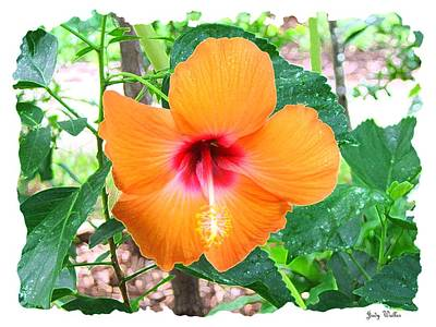 Orange Hibiscus Art Print by Judy  Waller