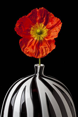 Gardening Photograph - Orange Iceland Poppy by Garry Gay