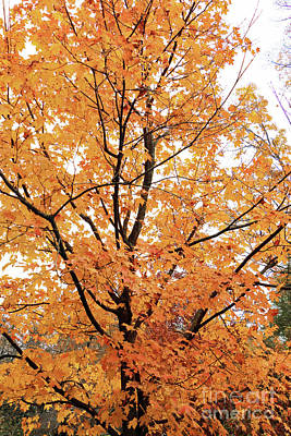 Photograph - Orange In Nature by Mary Haber