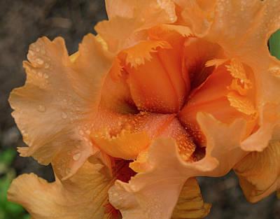 Photograph - Orange Iris Center by Jean Noren