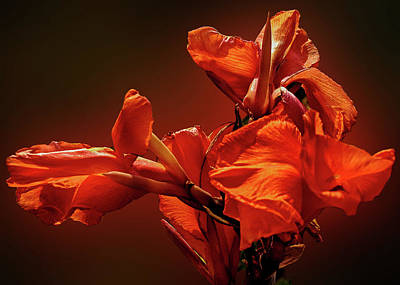 Photograph - Orange Iris Flower by Joseph Hollingsworth