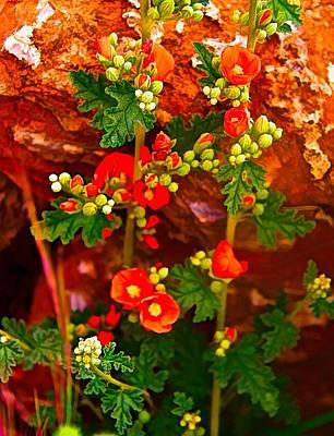 Photograph - Orange Is Spectaculor by Susan Crossman Buscho