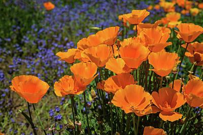 Photograph - Orange Jubilee by Lynn Bauer