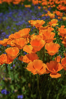 Photograph - Orange Jubilee - Vertical by Lynn Bauer