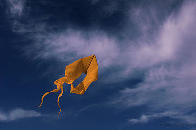 Photograph - Orange Kite by Pam Kaster